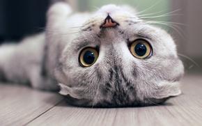 Picture kitten, eyes, Cat, animal, mustache, nose, upside down, depth of field, feline