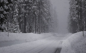 Picture road, snow, Winter, spruce forest