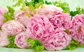 Picture bouquet, texture, peonies