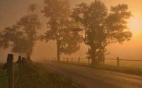 Picture road, field, trees, fog