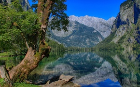 Picture mountains, lake, reflection, tree, Germany, Bayern, Germany, Bavaria, Berchtesgaden Alps, Berchtesgaden Alps, the Obersee lake, …