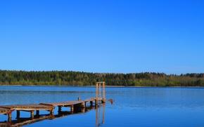 Picture forest, Lake, the bridge, Eagle
