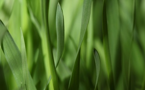 Picture macro, strips, narrow, greens, grass, leaves