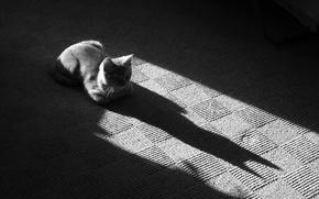 Wallpaper Black and white, Mat, 157, Koshak, shadow