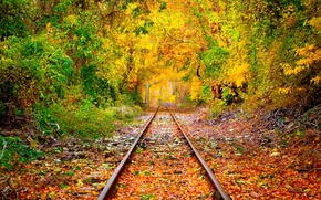 Picture forest, trees, foliage, rails, Autumn