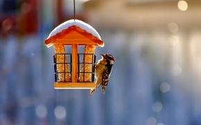 Picture snow, blur, bird, Feeder