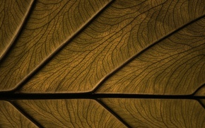 Picture macro, sheet, background, color, texture, veins, strange