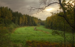 Picture autumn, forest, clouds, clearing