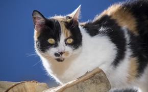 Wallpaper cat, look, logs
