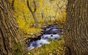 Picture autumn, forest, trees, nature, river