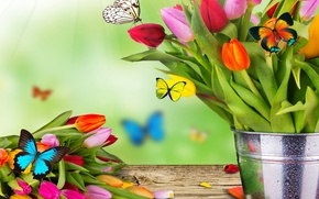 Picture flowers, collage, butterfly, bouquet, spring, bucket, tulips, moth