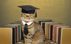 Wallpaper hat, tie, books, humor, scientist, cat