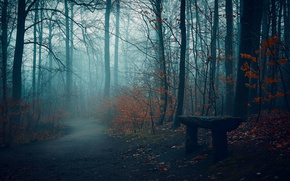 Wallpaper autumn, Park, bench, road, fog