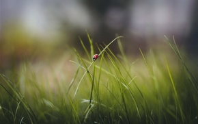 Picture grass, leaves, ladybug