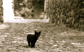 Picture kitty, street, black, looks