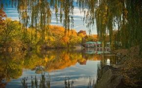 Wallpaper autumn, lake, pond, trees