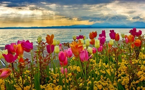 Picture the sky, clouds, flowers, mountains, lake, Italy, tulips, spring, garda