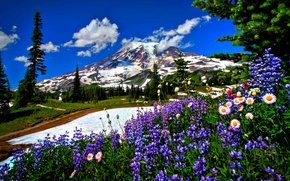 Picture forest, snow, flowers, Mountains