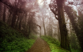 Picture road, mountains, nature, fog