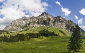 Picture forest, the sky, clouds, trees, mountains, tops, meadows