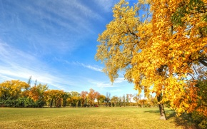 Picture autumn, the sky, grass, leaves, trees
