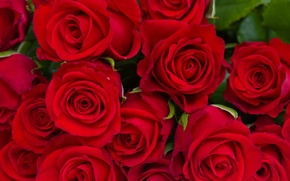 Picture leaves, flowers, roses, bouquet, red, buds