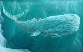 Picture sea, kit, under water, art, moby dick, white whale
