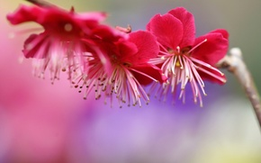 Picture flowers, tree, branch, spring, pink, flowering, drain