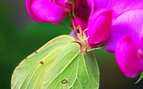 Picture flower, nectar, butterfly, wings, green