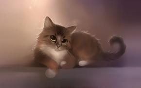 Wallpaper cat, mustache, look, apofiss, kitty, figure, tail, artist, berlioz, paws, cat