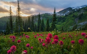 Picture forest, summer, flowers, mountains