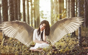 Picture forest, look, girl, trees, smile, wings, brown hair