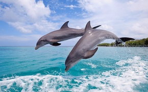 Picture sea, the sky, squirt, jump, pair, dolphins