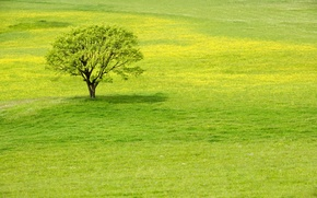 Wallpaper greens, grass, tree