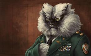 Picture cat, figure, awards, General, shoulder straps