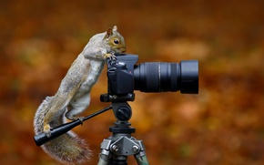 Picture protein, the camera, Wild Grey Squirrel
