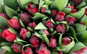 Picture flowers, bouquet, tulips, a lot, the view from the top