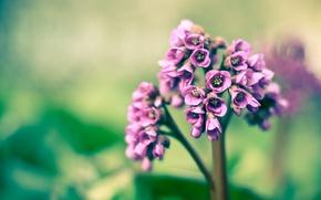 Picture purple, macro, spring