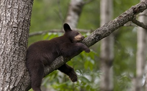 Picture tree, bear, sleeping