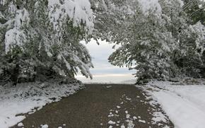 Picture road, winter, snow, cold