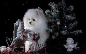 Picture dog, beads, figurine, tree, rocking, horse, angel, Spitz
