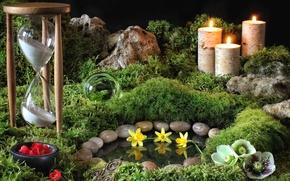 Wallpaper stones, watch, moss, candles, Narcissus, hellebore, heleborus