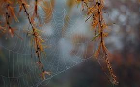 Picture macro, Web, macro, web