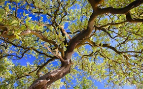 Picture the sky, leaves, branches, tree, trunk
