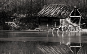 Wallpaper river, root, black and white