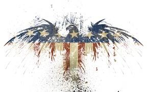Picture bird, eagle, flag, spot