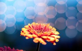 Picture flower, flowers, background, Wallpaper, blur, wallpaper, flower, widescreen, background, bokeh, full screen, HD wallpapers, flower, ...