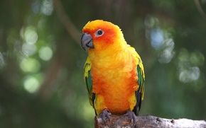 Picture Birds, parrot, Ara