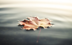 Picture autumn, water, sheet, leaf, maple