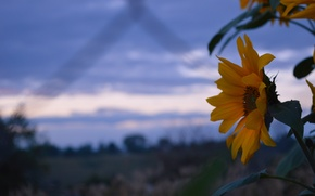 Picture the sky, the evening, Flower